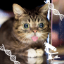 Cat Celebrity Lil Bub Lends Poop To Seattle Startup