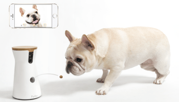 The Ellen effect: Dog camera startup sees sales soar after endorsement on The Ellen Show