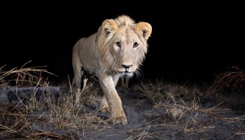 This wildlife photographer invented his own devices to capture images of dangerous and elusive animals