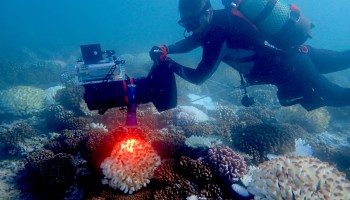 Can this map save coral reefs? Researchers aim to conserve natural resource with satellites and AI