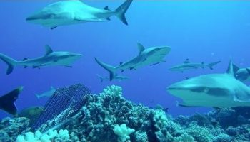 Go swim with the sharks in this 10-hour YouTube video from Paul Allen's Global FinPrint survey
