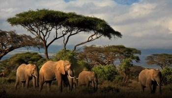 EarthRanger program widens focus from elephant killers to cross-species diplomacy