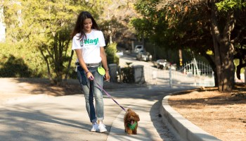 Struggling dog-walking startup Wag reportedly explored selling to top rival Rover