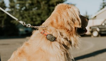 Lost pet? Pebblebee wants you to try Found, its latest improvement in location tracking devices