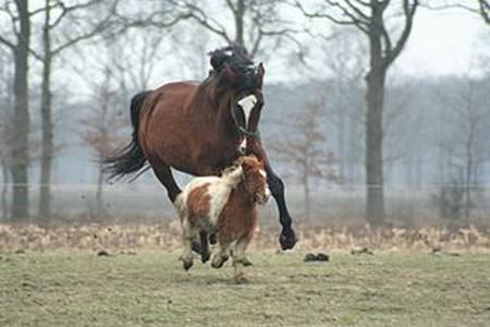 Cavallo e pony