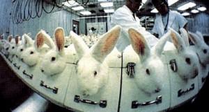 vivisezione_conigli500