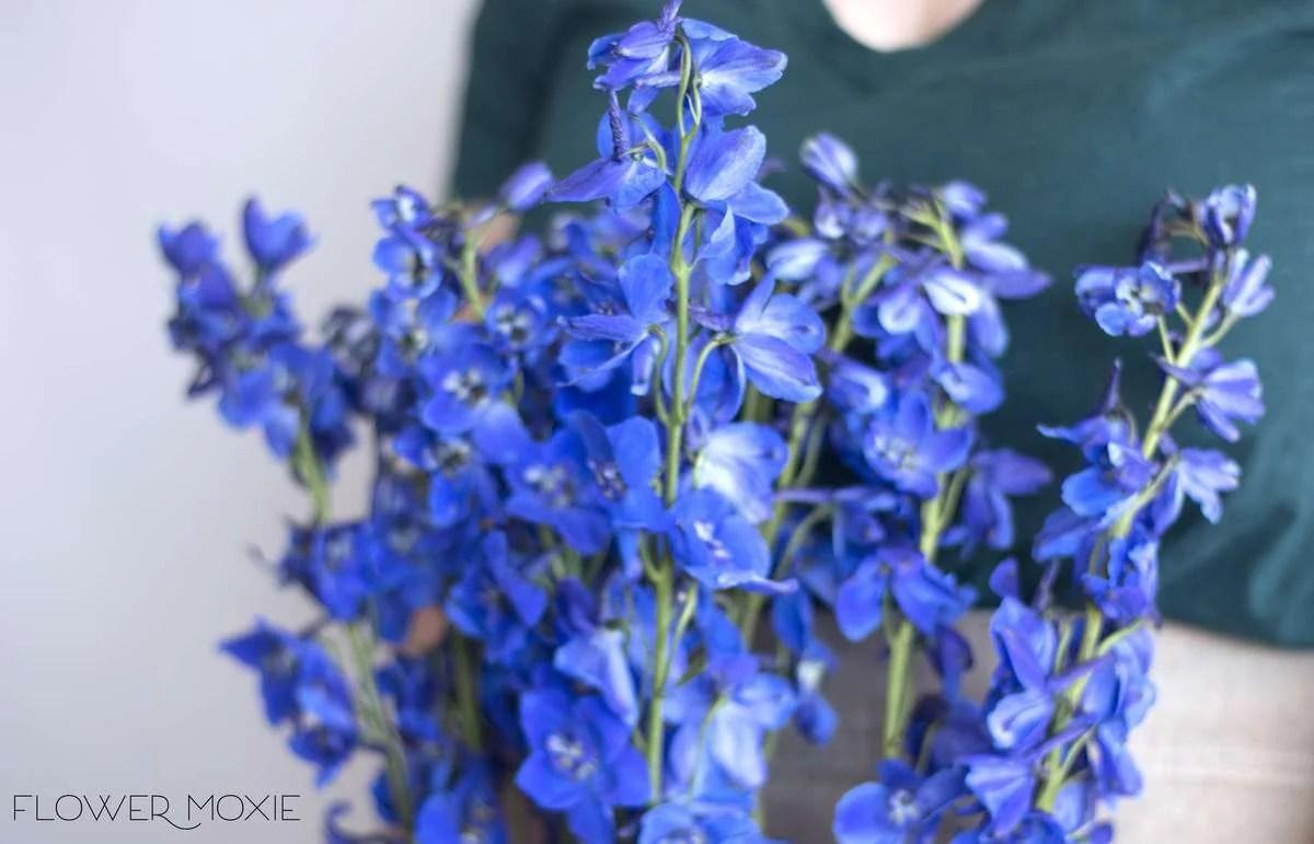 Delphinium- Dark Blue