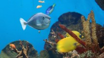 Barcelona Aquarium - Book Tickets & Tours
