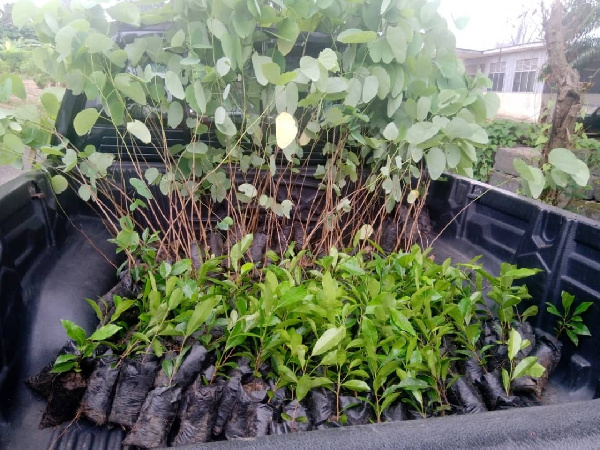 Inculcate tree planting and forest preservation habit in children – Forestry Commission