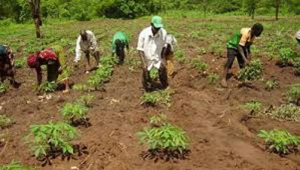 Peasant Farmers call for mainstreaming of Agroecology