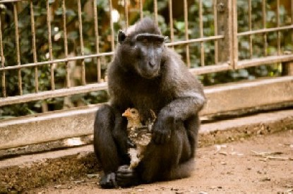 Prague Zoo shuts exhibit to protect primates from Indonesia – Nam News  Network (NNN)