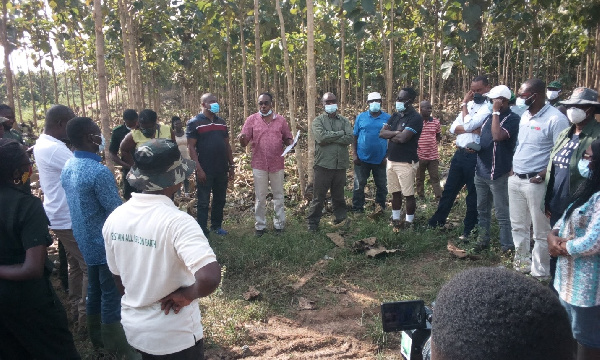 Small, medium scale plantation developers to receive government's support