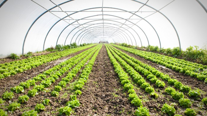 The Plastic Problem in Organic Farming · Giving Compass