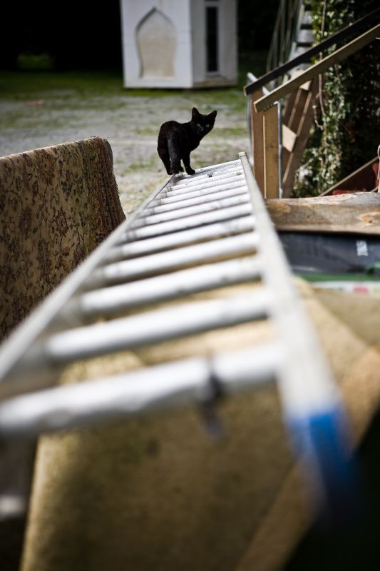 Ladder Cat is Watching You