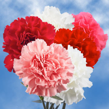 Valentines Day Carnations  GlobalRose