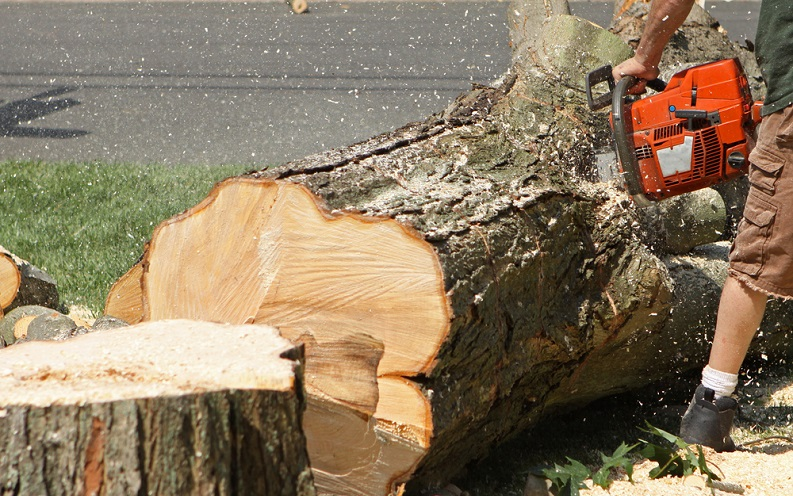 how_to_remove_a_tree_stump.jpg