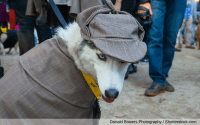 10 Outrageously Expensive Halloween Costumes for Pets ...