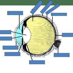 Eye Labeling Diagram Quiz Kenworth W900b Wiring Labelling