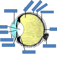 eye labelling quiz  [ 1061 x 938 Pixel ]