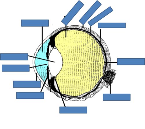 small resolution of eye labelling quiz quizeye labelling quiz