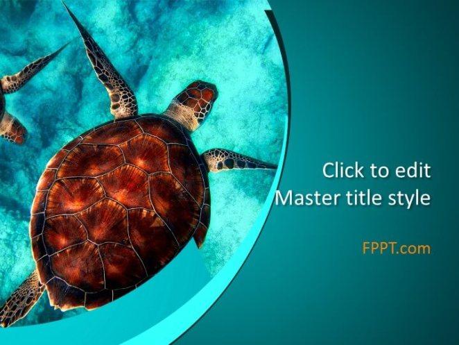 Sea turtle PowerPoint template
