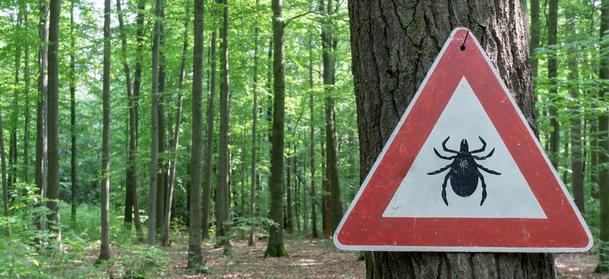 What goes with coronavirus lyme disease | What is Lyme disease ...