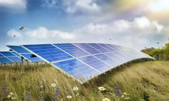 Pollinator Habitat Solar Energy