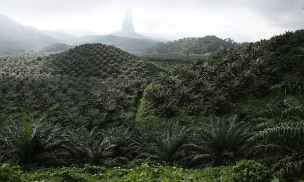 157 Menaces sur les forêts africaines