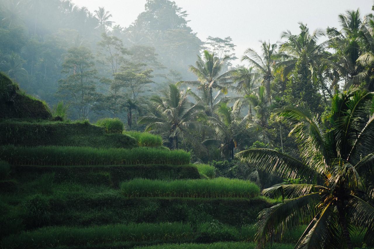 TP Pregnancy Photography in Ubud Bali  Gusmank