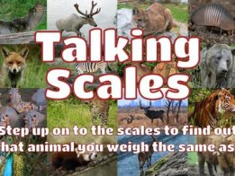 The Talking Scales