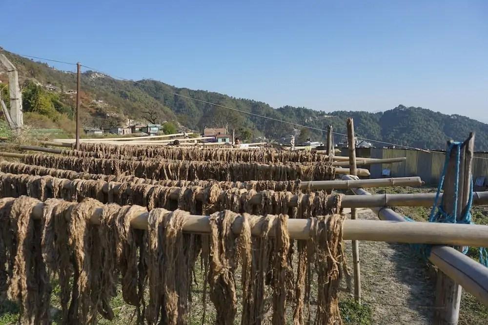 Instituto de pesquisa quer reconstruir economia do Nepal com produção sustentável de cânhamo