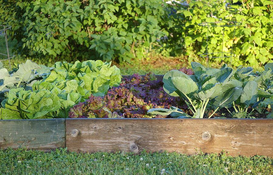 Planning Your Kitchen Garden Harvest To Table