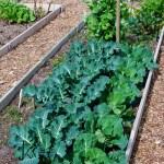 Vegetable Crop Soil Ph Tolerances Harvest To Table