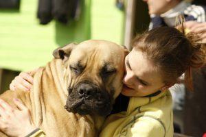Diätfutter für Hunde , das düfen Hunde auf keinen Fall essen