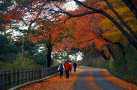 The Ultimate Guide to Autumn Foliage in Seoul 2015 by # ...