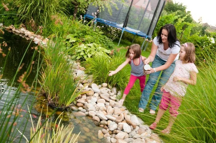 Garden pond safety: You must observe these laws and regulations for the safety of your pond.