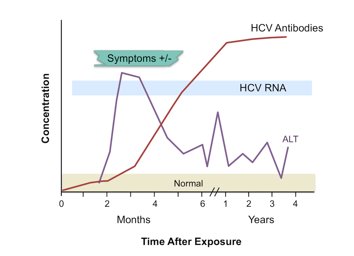 Note The Temporal Appearance Of Laboratory Markers Typically Observed With  Acute Hepatitis C Infection: Hcv. Figure 3. Laboratory Markers With Acute