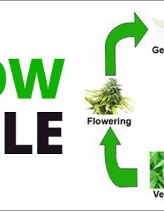 How to grow marijuana step growing and cultivation also plant growth chart hobit fullring rh