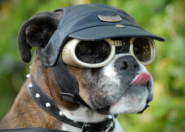 Doggles Dog Goggles (1)