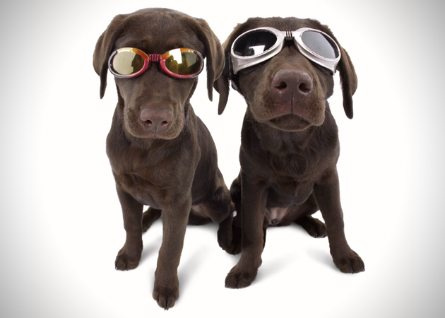 Doggles Dog Goggles (3)