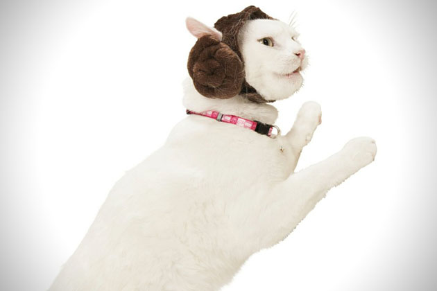 Petco x Star Wars Pet Collection 4