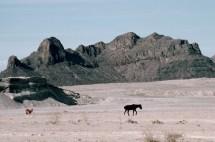Durango Mexico Desert