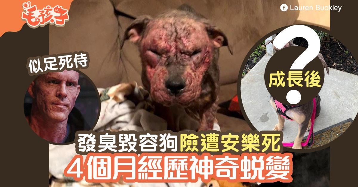【領養狗】毀容狗險遭安樂死 被領養4個月牠經歷「神奇變化」|香港01|寵物