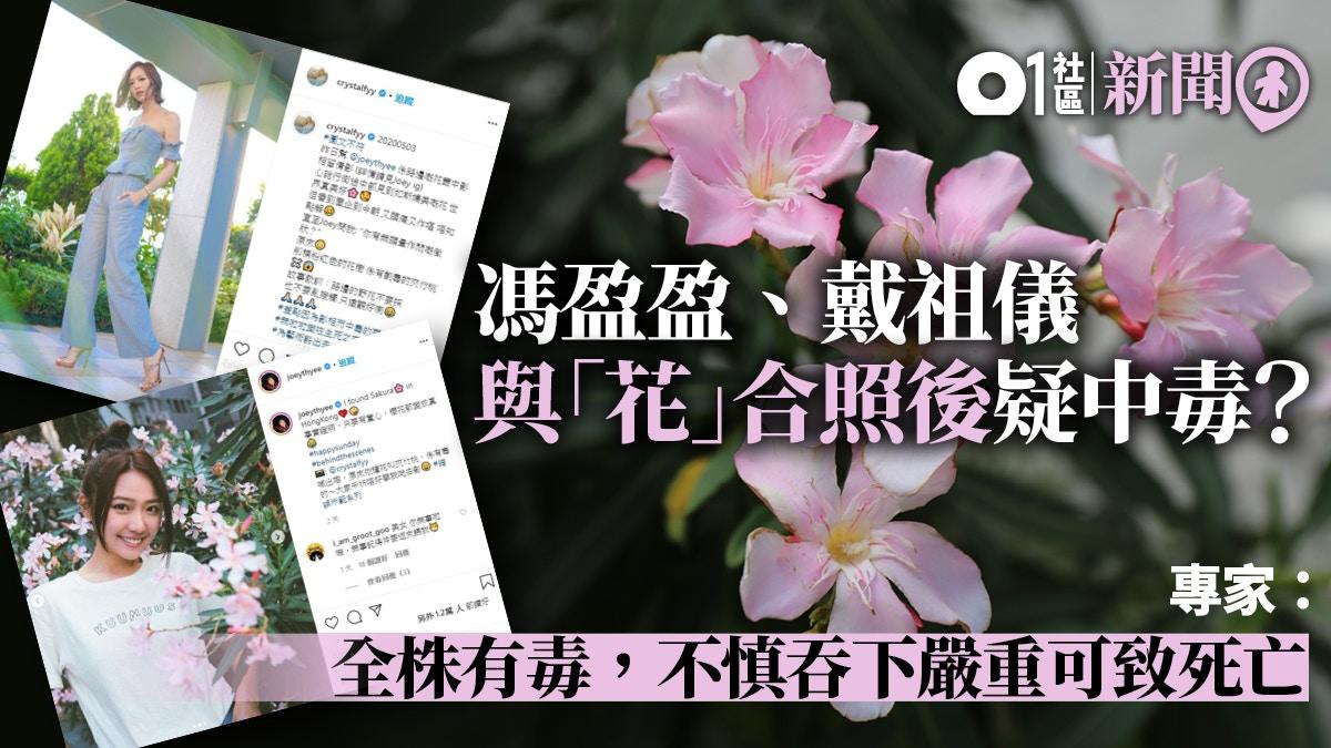 【人生】 夾竹桃 畫像 - 花のイメージのコレクション