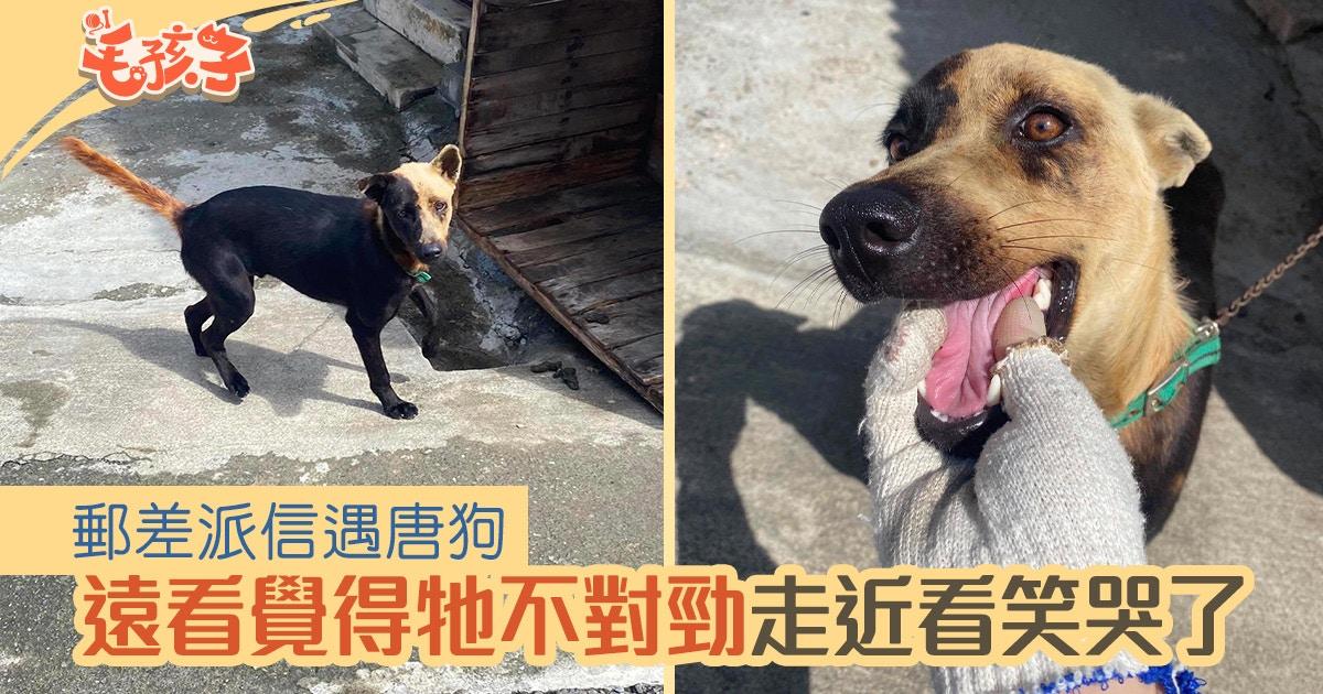 【唐狗】郵差送信遇唐狗 欲逗狗之際覺不對勁:陰影會跟著牠走?|香港01|寵物