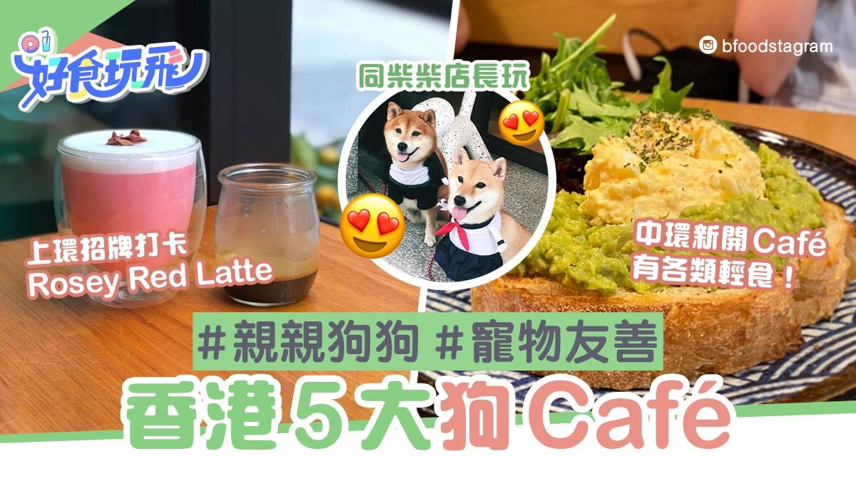狗狗好去處 香港5間狗cafe推介 Black Sugar Coffee與柴犬互動 香港01 食玩買