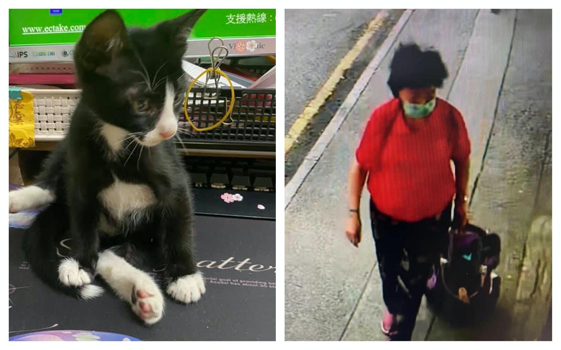 油麻地果欄偷貓案 警拘涉案女子 涉虐待動物及爆竊 香港01 突發