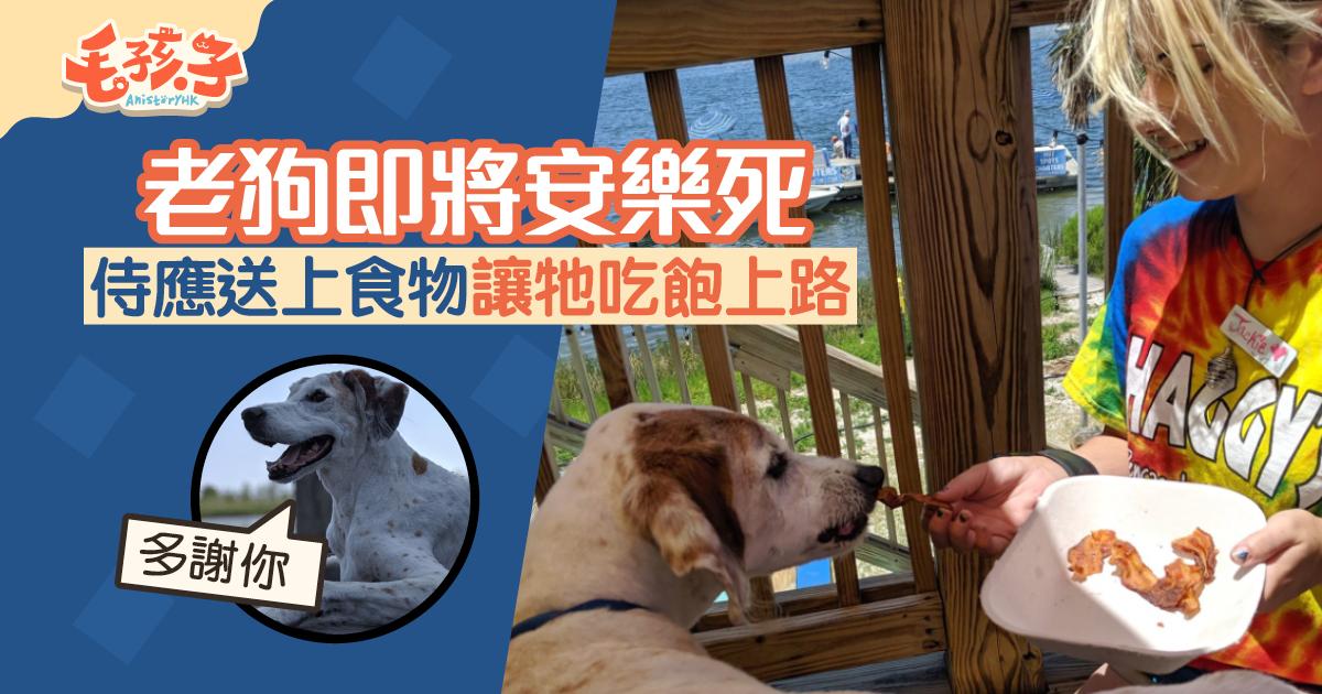 【安樂死】在老狗安樂死前 侍應送上大餐 讓牠吃飽上路|香港01|寵物