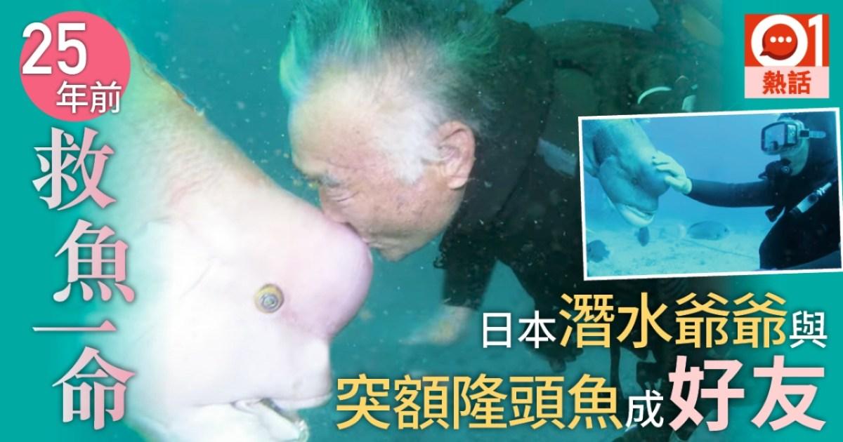 【人魚情未了】 日本潛水爺爺救魚一命 築25年深海友情