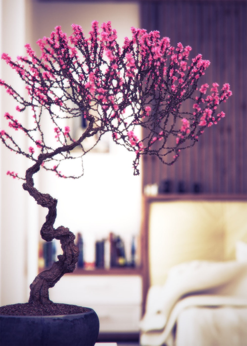 Bonsai In Interior Settings